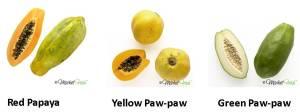 pawpaw-papaya-varieties